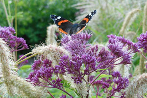 vrede vrijheid vlinders